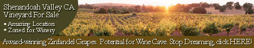 Shenandoah California vineyard for sale, prize winning Zinfandel grapes, zoned for winery, cave potential