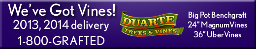 Duarte Nursery, Inc. is a family owned and operated nursery located near Modesto in the Central Valley of California.  Duarte Nursery is the largest permanent crops nursery in the United States, with a history of aggressively marketing innovative products.