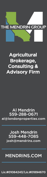 The Mendrin Group